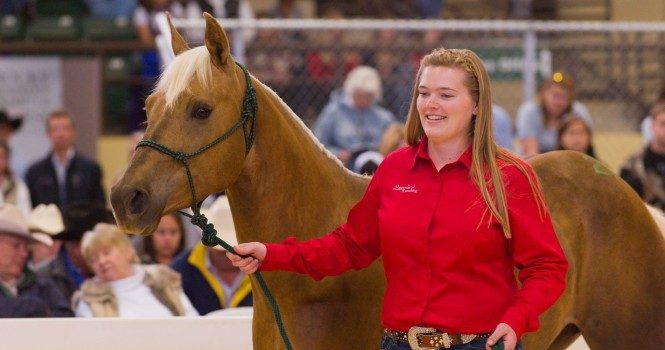 A female student leads her young horse through the sale ring