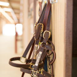 Leather halters hanging on the barn wall at CSU