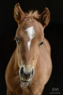 A sorrel foal at the ERL