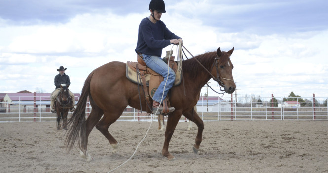 student gets young horse used to a rope