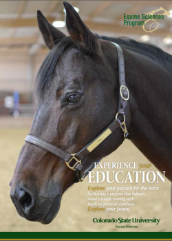 Cover of the equine brochure featuring a horse head