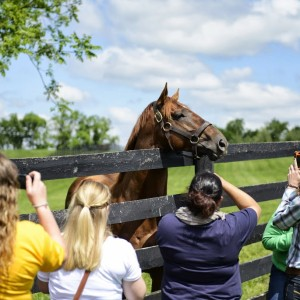 students meeting a horse at taylor made in kentucky