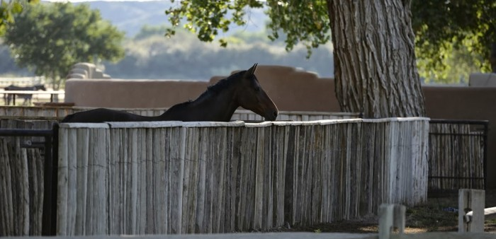 A horse looks over a fence at Rancho Corazon
