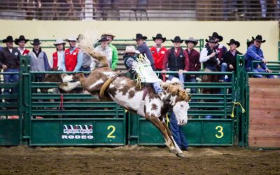 Rodeo team student riding in bareback competition