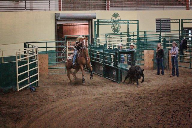 Rodeo Club Equine Sciences Colorado State University